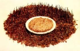 Бутербродная масса из проросшей пшеницы