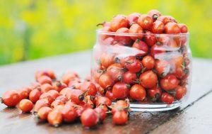 О пользе рубиновых ягод шиповника