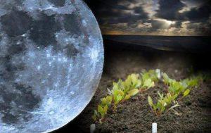 Ультраскороспелые томаты по лунному календарю для посадки