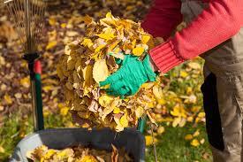 Подготовка сада к зиме. Советы опытных садоводов