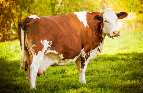 Реализация фермерского мяса