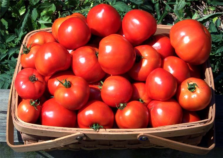 Помидор (томат)