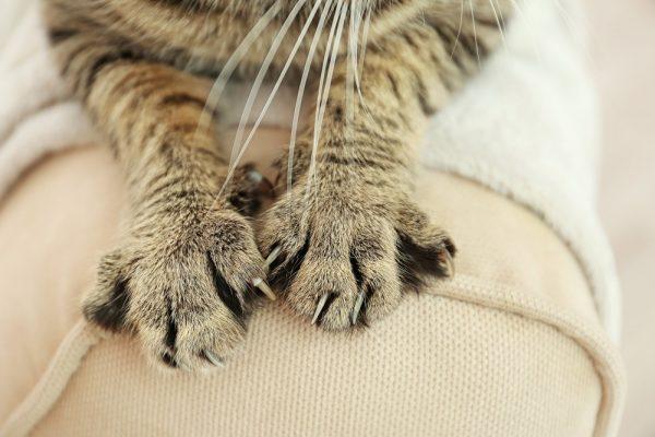 Сколько пальцев у кошки и некоторые другие интересные факты
