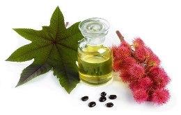 Касторовое масло – «жидкое золото» для волос и кожи