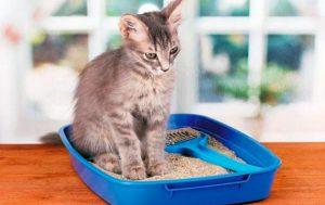 Нарушение функций мочевого пузыря у собак и кошек