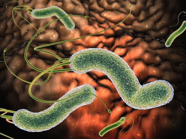 Болезни и паразиты
