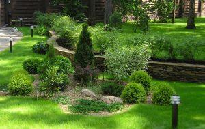 Формы озеленения территории