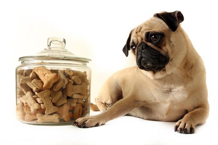Как выбирать и не ошибиться с сухим кормом для собаки?