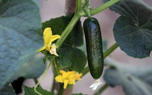 Какие плоды стоит выращивать на своем участке и их полезность