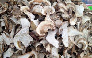 Белый сушеный гриб: польза и условия хранения