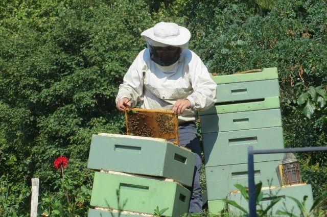 Почему стоит покупать мед напрямую у пасечника